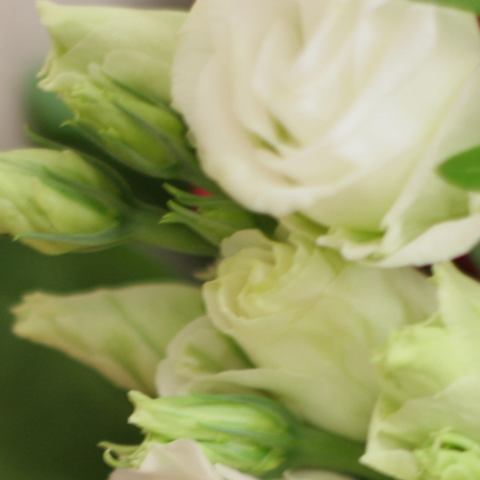 Flores Rita Villar