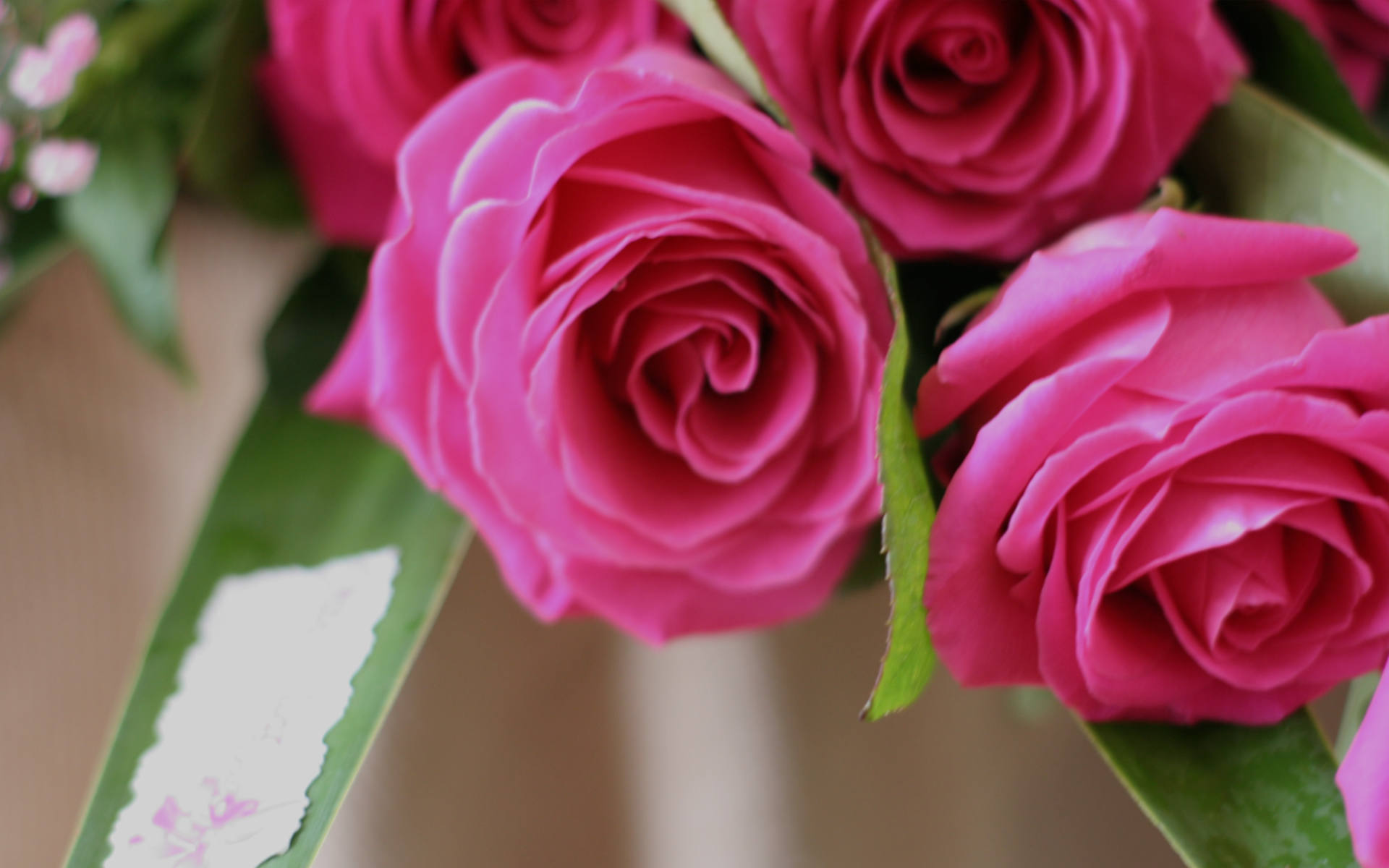 rosas Rita Villar