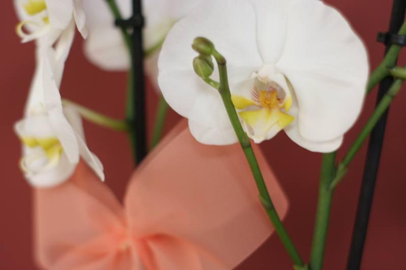 Orquídea. Rita Villar
